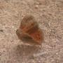 Mornuh - Butterfly