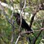 Wogorr - Crow
